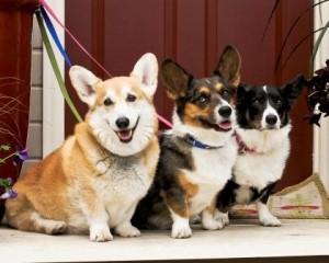 dogs_oct2012
