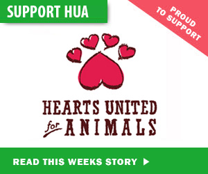 Support-HUA
