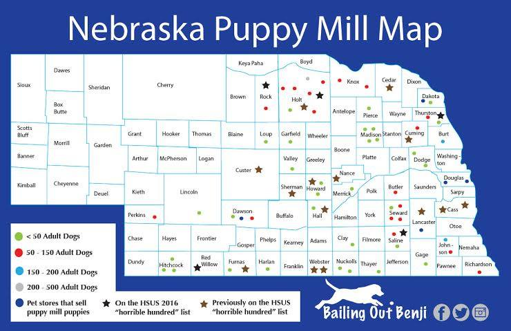 do you know how many puppy mills are in nebraska   pets