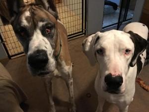 Gracie (left) and Bella
