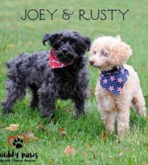 2017 pick a pooch success story senior adoptions   pets