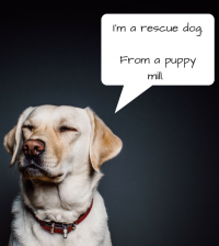 Im a rescue dog