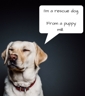 A Puppy Mill Cannot Be A Rescue Too Or Can It Pets In Omaha