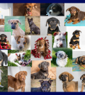 Parvo Puppies aided by Muddy Paws Second Chance Rescue