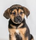 Parvo puppy from Texas