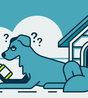is hemp or cbd better for dogs