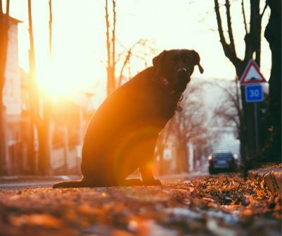Veterinarians - Pets in Omaha