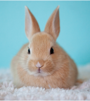 7 Good Reasons You Should Consider Having A Bunny As A Pet Pets In Omaha